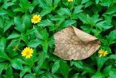 Bladeren stock fotografie