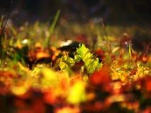 Bladeren Stock Foto's