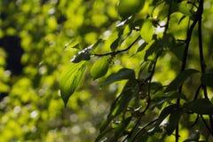 Bladeren Royalty-vrije Stock Foto