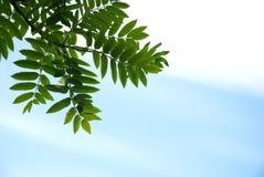 Bladeren & hemel Royalty-vrije Stock Foto