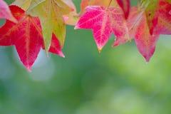 Bladeren in Autumn Colors Stock Fotografie