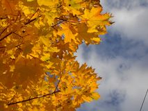 Bladeren Autumn Motives Stock Afbeeldingen