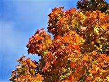 Bladeren Autumn Motives Stock Fotografie
