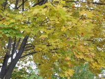 Bladeren Autumn Motives Stock Foto's