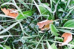 Bladeren in berijpt gras Stock Fotografie
