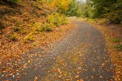 Bladeren bij de tarmac gebogen landweg langs bomen royalty-vrije stock foto