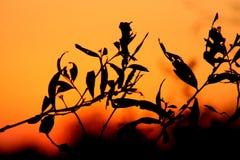 Bladeren bij zonsondergang royalty-vrije stock afbeelding