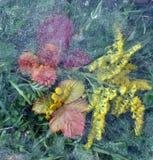 Bladeren, blad, bloemen, gras onder ijs stock foto