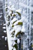 Bladeren buiten metaalbars, met sneeuw Royalty-vrije Stock Afbeelding