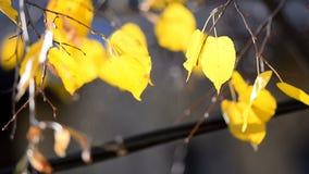 Bladeren in contourlicht stock video