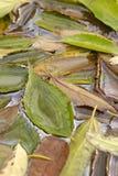 Bladeren in daling Royalty-vrije Stock Foto's