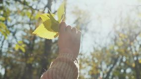 Bladeren in de handen van een meisje stock footage