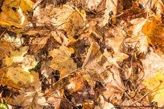 Bladeren in de herfst Royalty-vrije Stock Afbeelding