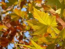 Bladeren in de herfst stock afbeelding