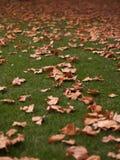 Bladeren in de herfst Stock Afbeeldingen