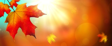Bladeren in de herfst royalty-vrije stock afbeeldingen