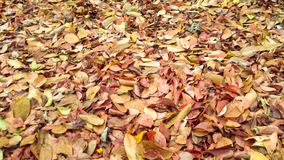 Bladeren in de herfstseizoen royalty-vrije stock foto's
