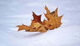Bladeren in de sneeuw Stock Foto's
