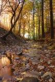 Bladeren in de stroom Stock Foto's