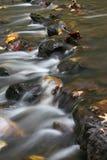 Bladeren in de stroom stock fotografie