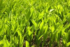 Bladeren in de tuin stock foto