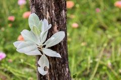 Bladeren in de tuin, achtergrond Stock Afbeeldingen