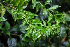 Bladeren in de tuin op een regenachtige dag Royalty-vrije Stock Foto
