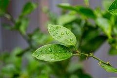 Bladeren in de tuin op een regenachtige dag Stock Afbeelding