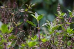 Bladeren in de tuin op een regenachtige dag Royalty-vrije Stock Foto's