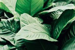 Bladeren in de tuin, Verse groene bladerenachtergrond in het tuinzonlicht Textuur van groene bladeren, Varenblad in Forest Garden Royalty-vrije Stock Foto's