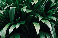Bladeren in de tuin, Verse groene bladerenachtergrond in het tuinzonlicht Textuur van groene bladeren, Varenblad in Forest Garden Stock Foto