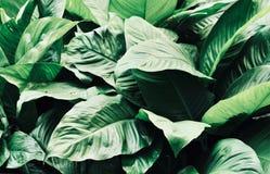 Bladeren in de tuin, Verse groene bladerenachtergrond in het tuinzonlicht Textuur van groene bladeren, Varenblad in Forest Garden Royalty-vrije Stock Foto