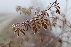 Bladeren in de vorst stock foto's