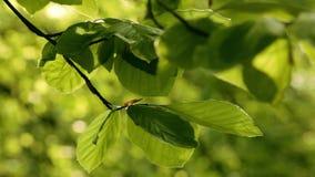 Bladeren in de wind stock videobeelden