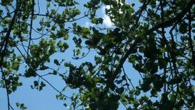 Bladeren in de wind stock video