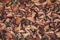 Bladeren in de winter Stock Afbeeldingen