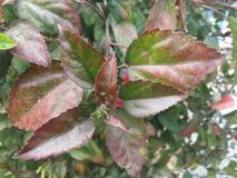 Bladeren in de winter Royalty-vrije Stock Afbeelding