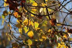 Bladeren in de winter in het platteland stock fotografie