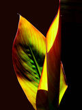 Bladeren in de zonsondergang Royalty-vrije Stock Foto's