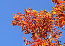 Bladeren die de mooie herfstkleuren openbaren stock fotografie