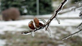Bladeren die in ijs worden behandeld royalty-vrije stock foto's