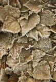 Bladeren die met rijp worden behandeld Stock Afbeelding