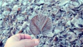 Bladeren die met vorst, dichte omhooggaand worden behandeld stock footage