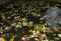 Bladeren die op een kleine vijver drijven Stock Afbeeldingen