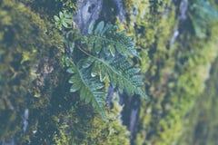 Bladeren die op een rots worden gekweekt royalty-vrije stock fotografie