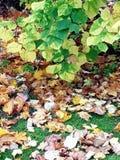 Bladeren die ter plaatse van een boom vallen stock afbeelding