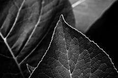 Bladeren die zijn Royalty-vrije Stock Foto