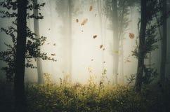 Bladeren door de wind in geheimzinnig bos met mist worden geblazen die royalty-vrije stock afbeelding