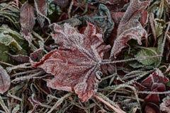 Bladeren door ijs worden behandeld dat Royalty-vrije Stock Fotografie