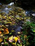 Bladeren in een Kreek Stock Foto